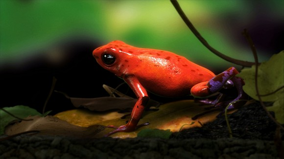 Ed Atkins and Simon Martin, Untitled (Strawberry Poison Dart Frog: Demuxed), 2011, film still, courtesy the artists, Galerie Isabella Bortolozzi, Cabinet Gallery London, and MOT International