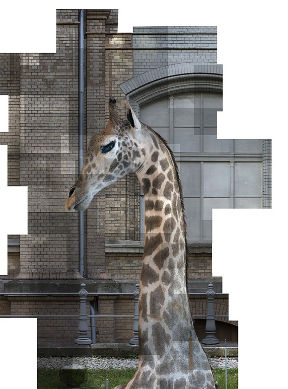 Ilit Azoulay, Exhibit 83: STUFFED GIRAFFE (detail from SHIFTING DEGREES OF CERTAINTY, 2014), inkjet print