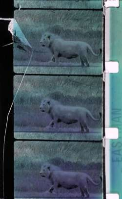 Cécile Fontaine, SAFARI LAND,1996, Filmstill, 16mm Film, 10:00 min, Courtesy Light Cone<br>